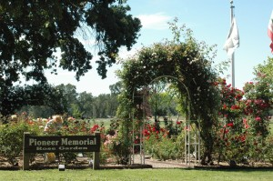 "Glorious Rose Arch in the ""Pioneer Memorial Garden"" in May"
